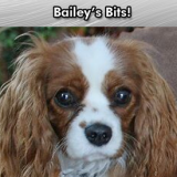Bailey's Bits: Bailey on When to Quit