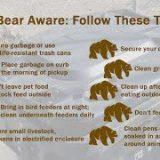 Bears Emerge from Winter Hibernation
