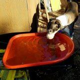 Blessed Rain– buckets and wheelbarrows FULL