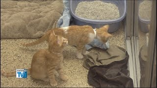 Donors Help Humane Society with 416 Fire Evacuees