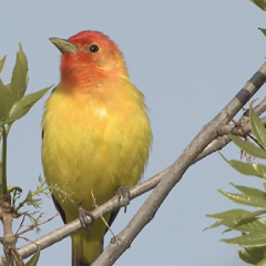 Bird Enthusiasts Head to Cortez for Avian Festival