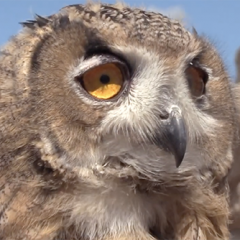 Learn More about Raptors at Show