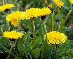 A Love for Weeds: Garden Pest Appreciation