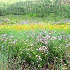 Wildflower season offers scenic hikes